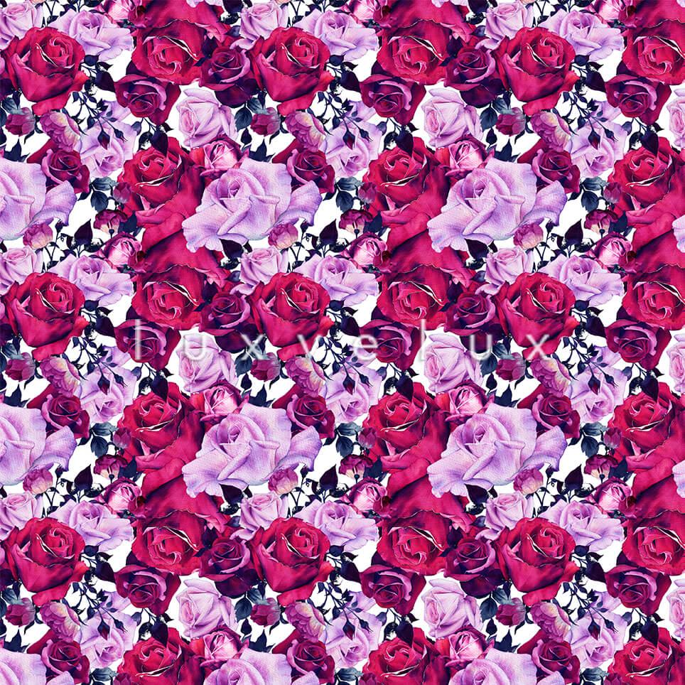 Rose Garden Roses Fuchsia Pink Kitty