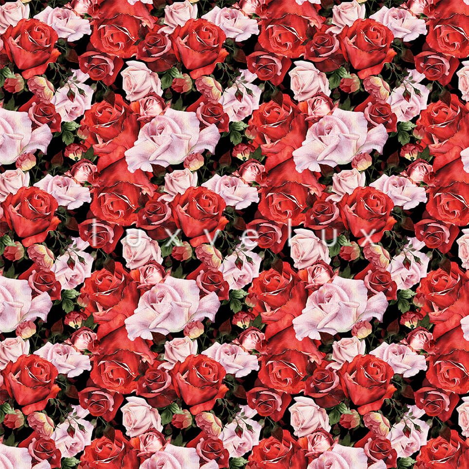 Rose Garden Roses Red Pink Kitty